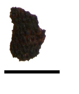 Fragmented seed of corncockle ©Lisa Lodwick